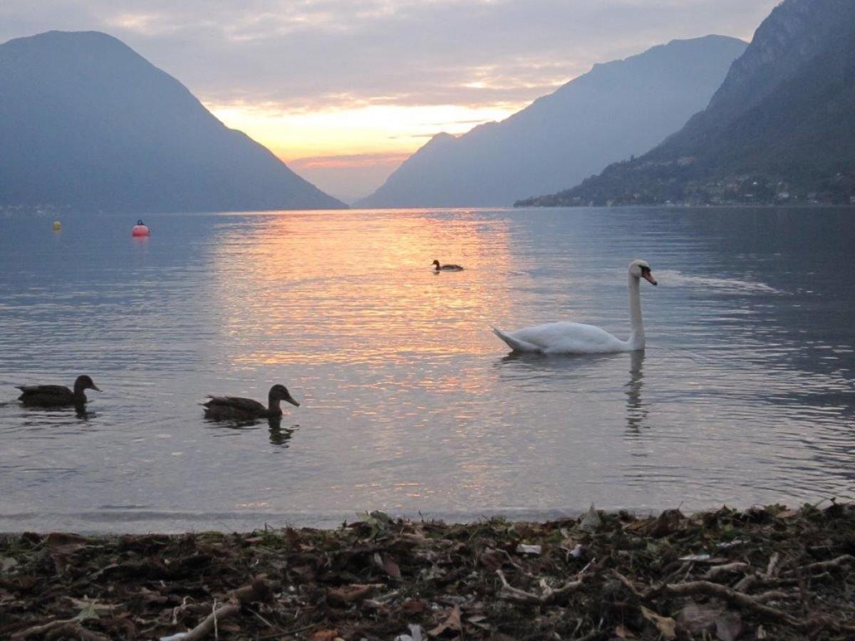 Te huur chalet direct aan het Meer van Lugano met havenplaats header afbeelding