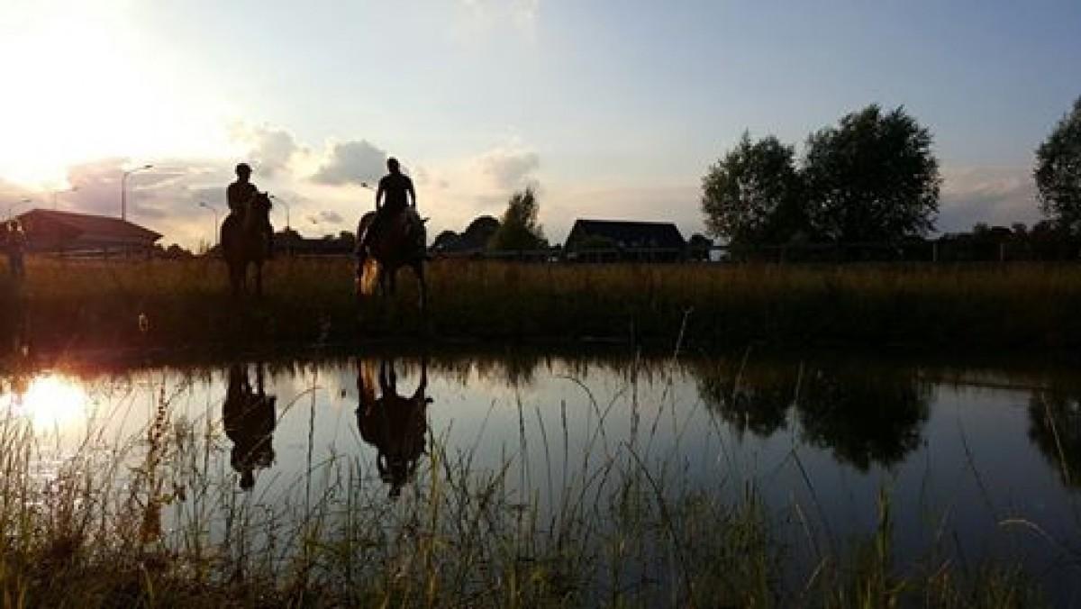Op vakantie met of zonder je paard header afbeelding