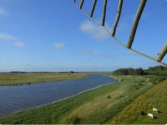 Vakantiehuis-op-Texel-Ganzenvlucht-m.png