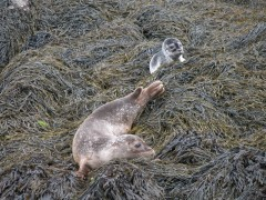 Seals and pups 057.jpg
